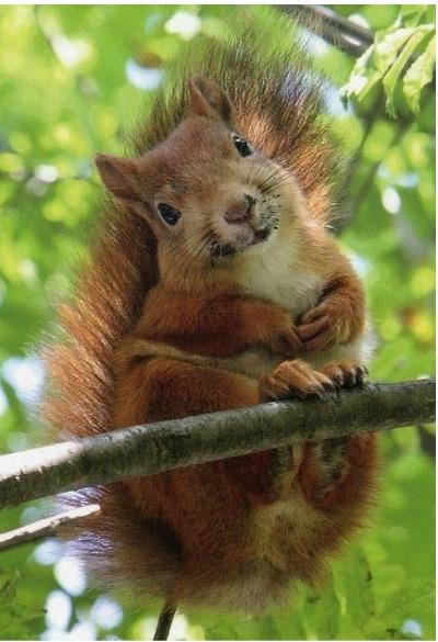 squirrel spirit animal and symbolism