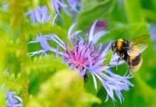 Symbolic meaning of Bee and the powers of feminine allure