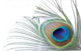feather tattoo idea for eye of peacock feather