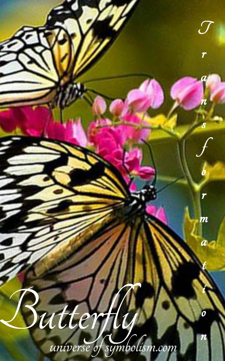 butterfly symbolism & meaning   Butterfly Spirit, Totem & Power Animal - Symbol of transformation and transcendence. . .