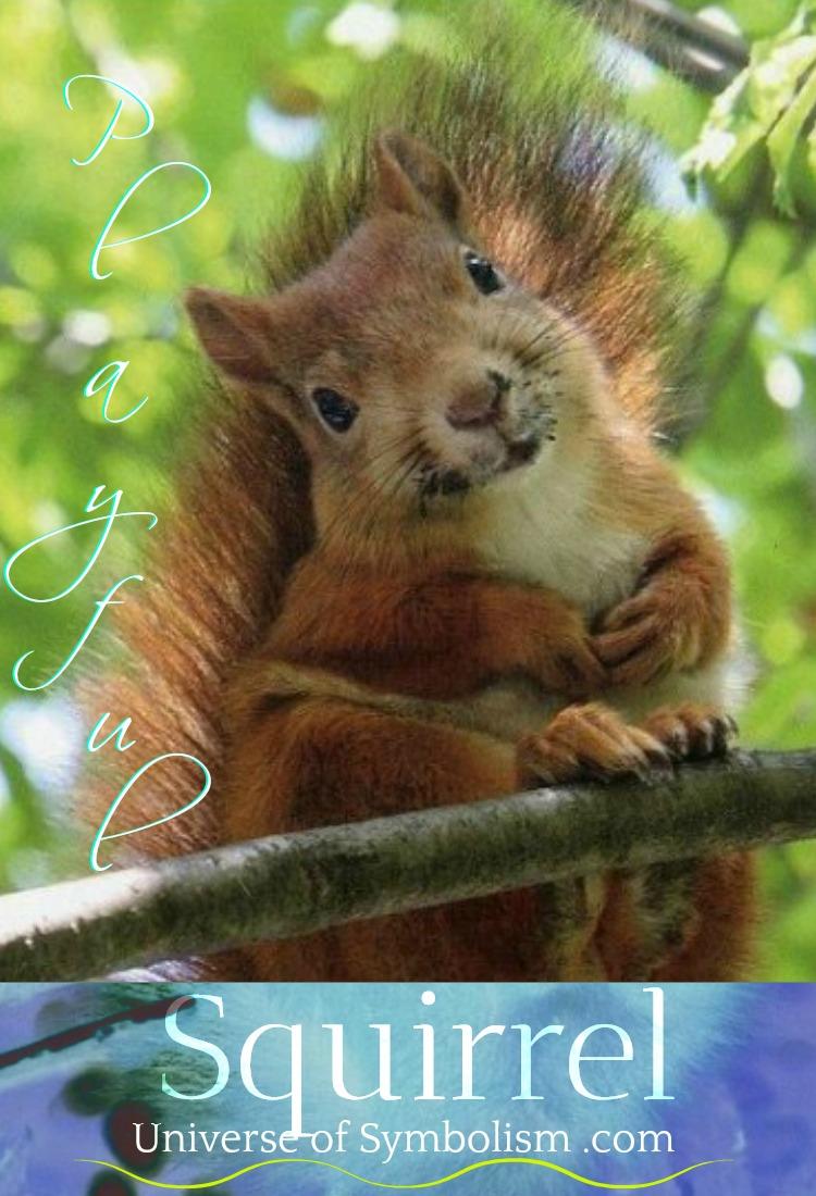 squirrel spirit animal meaning and squirrel symbolism