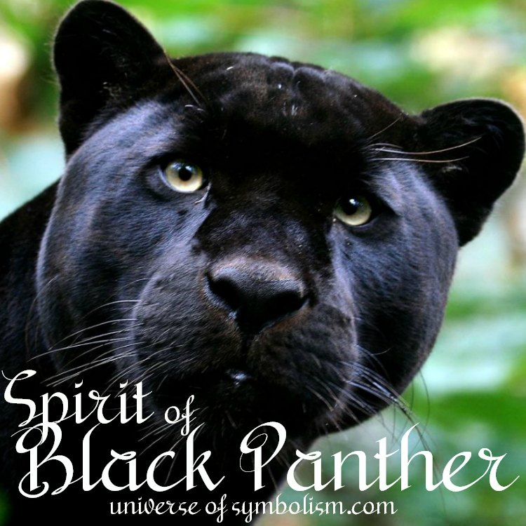 black panther spirit, totem, power  animal meaning and symbolism