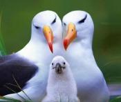 albatross meaning
