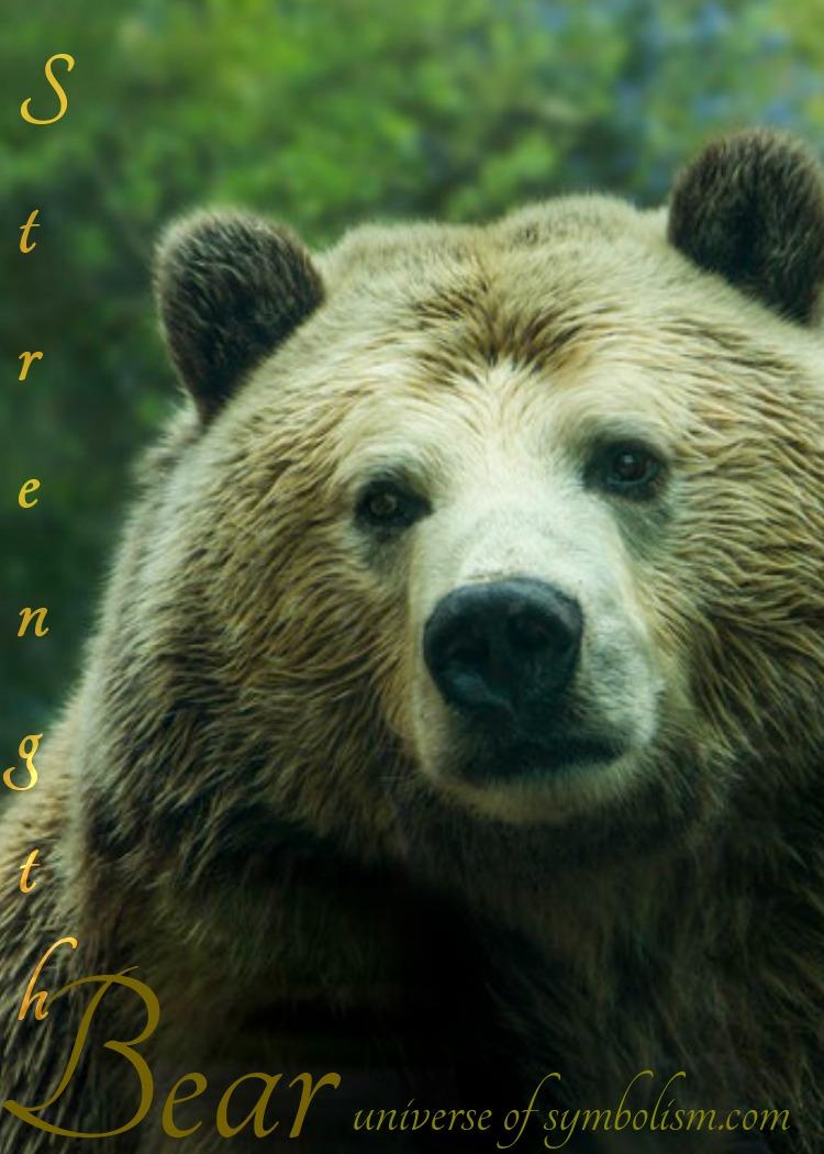 Bear Symbolism & Meaning | Bear Spirit, Power & Totem Animal