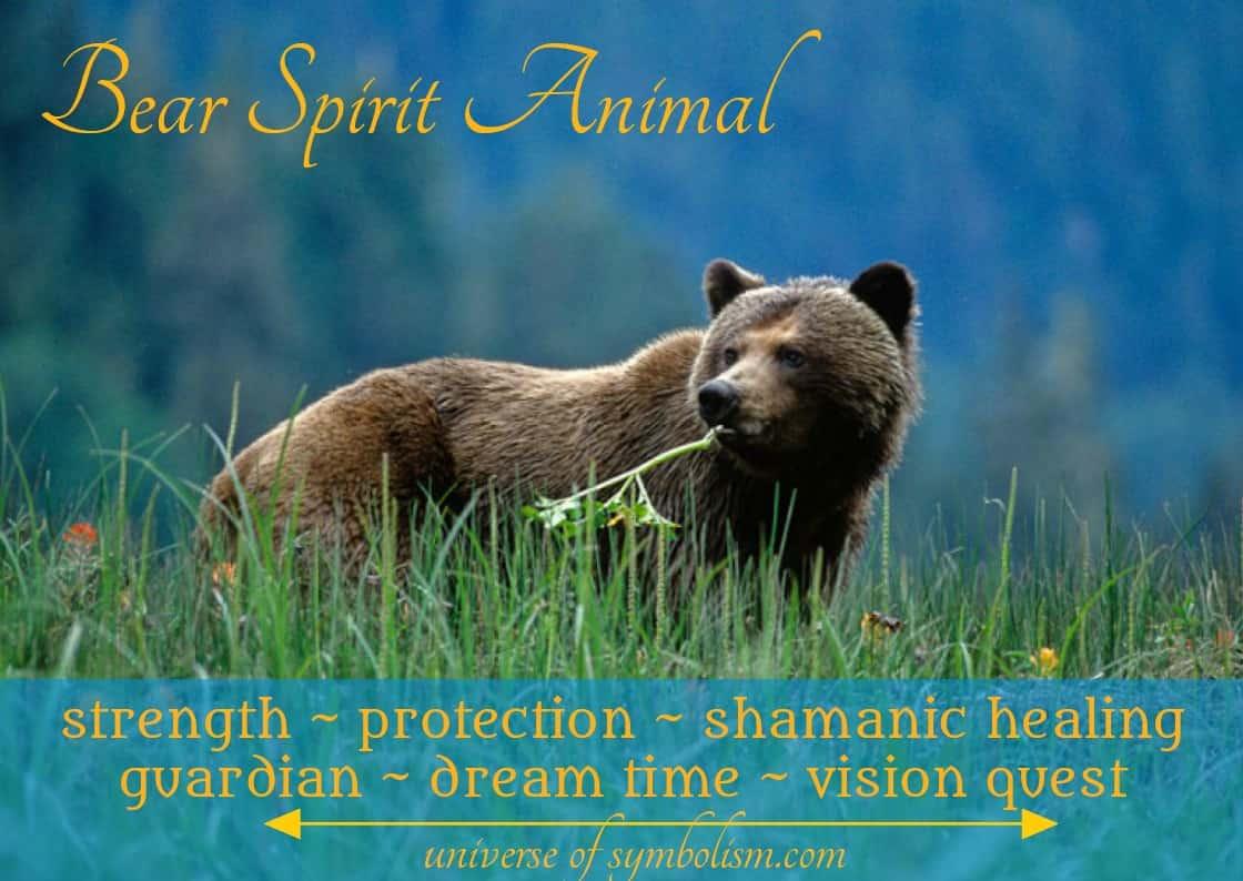 Bear Spirit Animal Symbolism & Spiritual Meaning with Bear Dream Symbolism