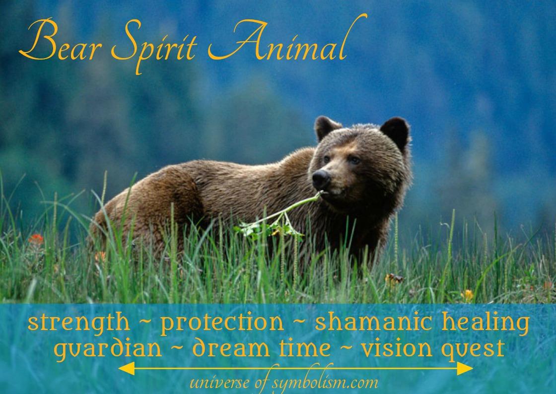 Bear Spirit Totem Power Animal Symbolism & Meanings of the Bear