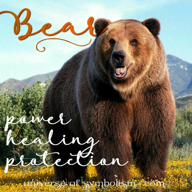 Grizzly Bear Spirit, Power, Totem Animal Symbolism & Meaning