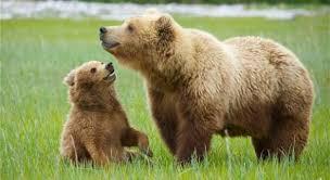 bear totem with cub