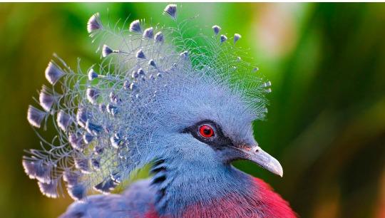 bird symbolism