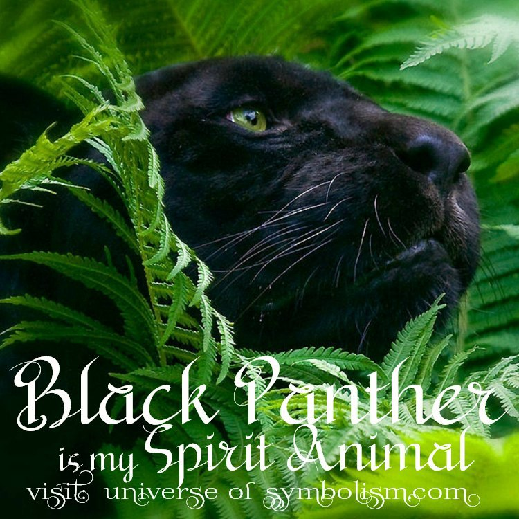 Black Panther Spirit Animal | Symbolism and Meaning