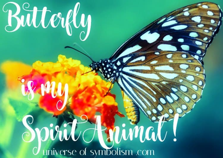 Butterfly is My Spirit Animal | Symbolic & Spiritual Meaning of Butterfly | Butterfly Dream Symbolism