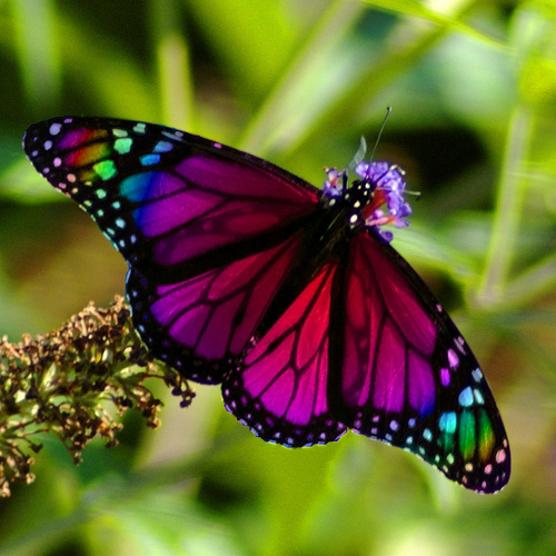 Butterfly Symbolism on Color Life Cycle 7