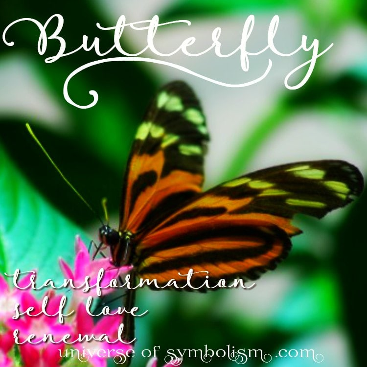 Butterfly Symbolism & Meaning | Butterfly Spirit, Totem & Power Animal - Symbol of transformation and transcendence. . .