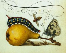 Vintage butterfly tattoo inspiration