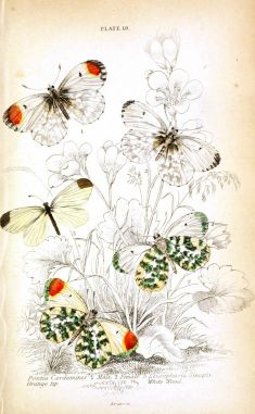 Vintage butterfly tattoo ideas
