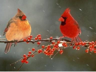 Cardinal symbolism. .. power, happiness, spiritual messenger