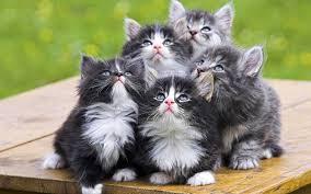 kitten symbolism