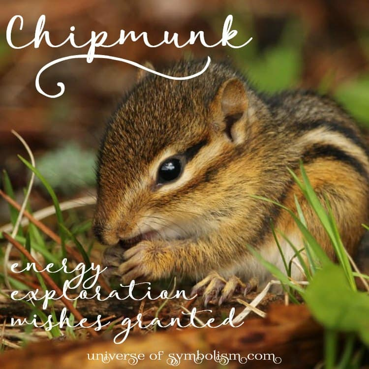 Chipmunk Symbolism & Meaning, Spirit, Totem & Power Animal Chipmunk symbolizes energy, exploration and wishes