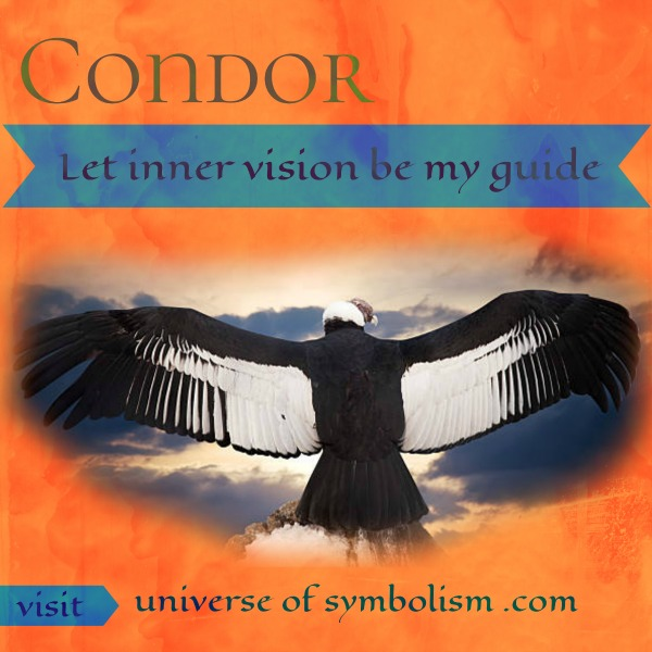 Condor Spirit Animal