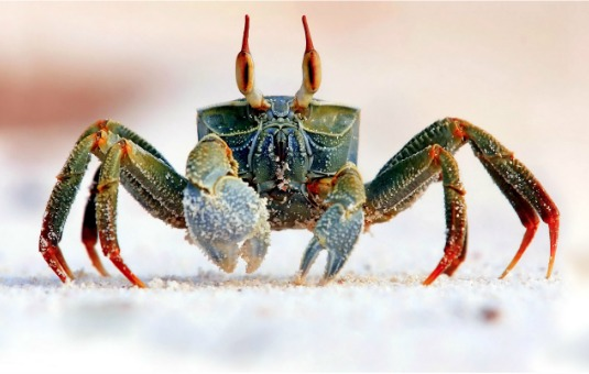 Crab Symbolism - Self Protection