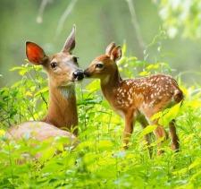 Deer Totems