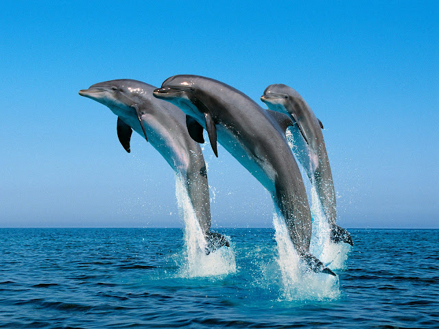 dolphin totem animals