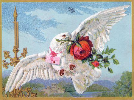 Vintage Dove Tattoo Idea