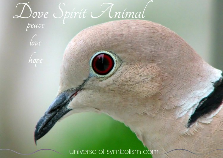 Dove Symbolism Dove Meaning Dove Spirit Totem Animal Powers
