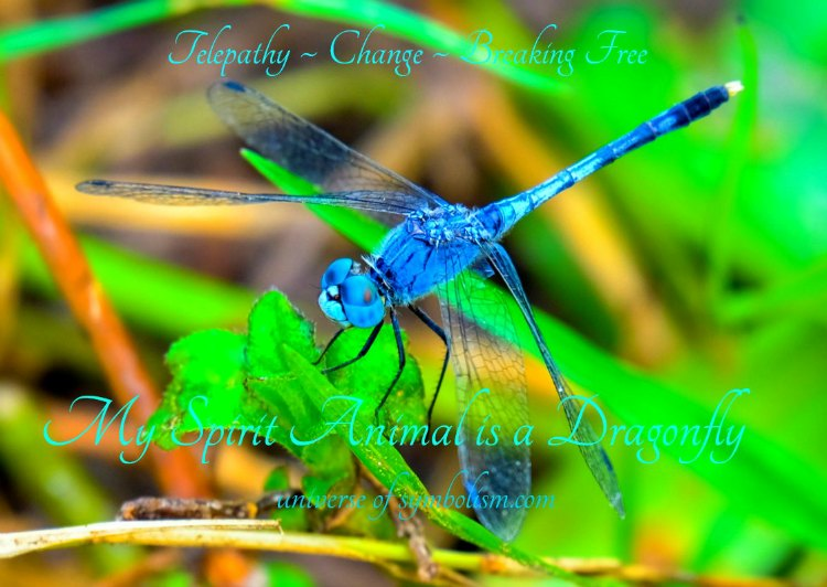 Symbolic Dragonfly Meaning Dragonfly Spirit Totem Animal Guidance