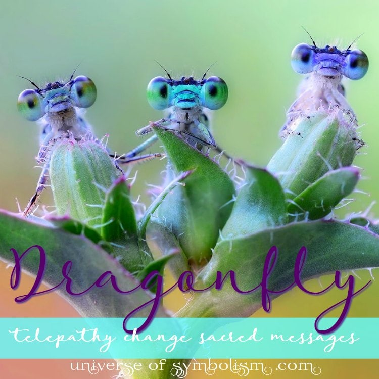 Dragonfly Symbolism & Meaning | Spirit, Power & Totem Animal Healing Powers & Attributes ~ Dragonfly signifies telepathy, change, sacred messages...