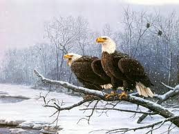 Eagles on a branch in the snow