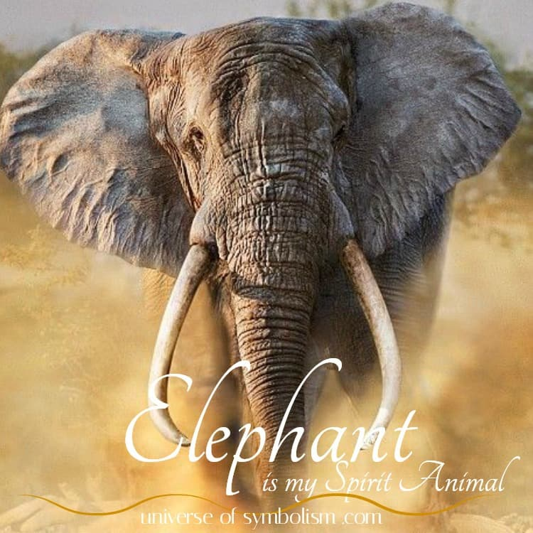 Elephant Symbolism & Meaning | Elephant Spirit, Totem & Power Animal | Dream & Spiritual Meaning of Elephant | Ancient Wisdom & Healing of the Elephant