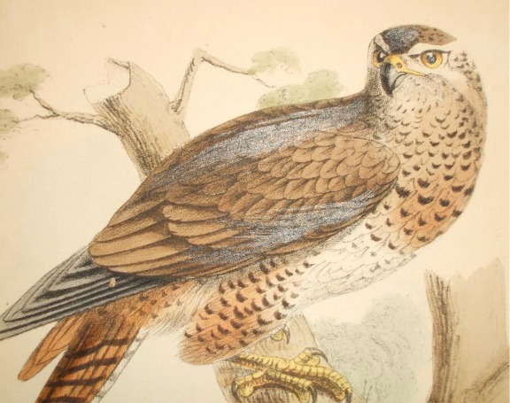 Exceptional Vintage Falcon Tat Idea