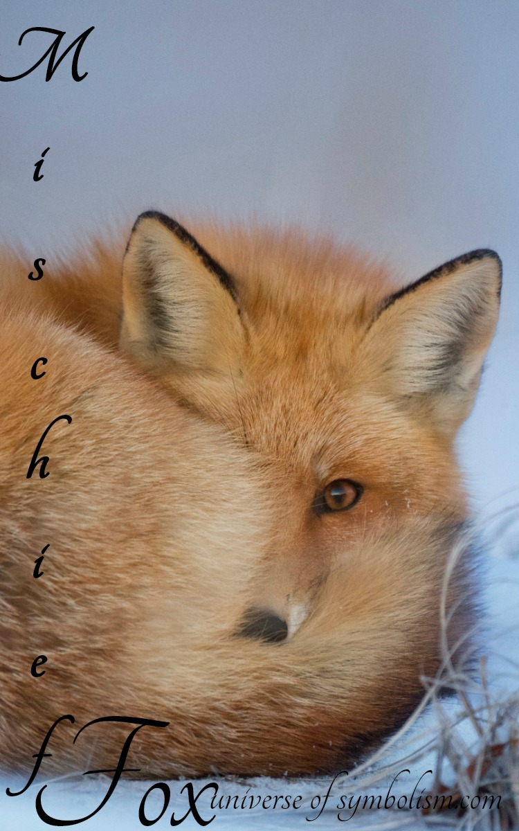 Symbolic Meaning of Fox | Spirit, Totem & Power Animal