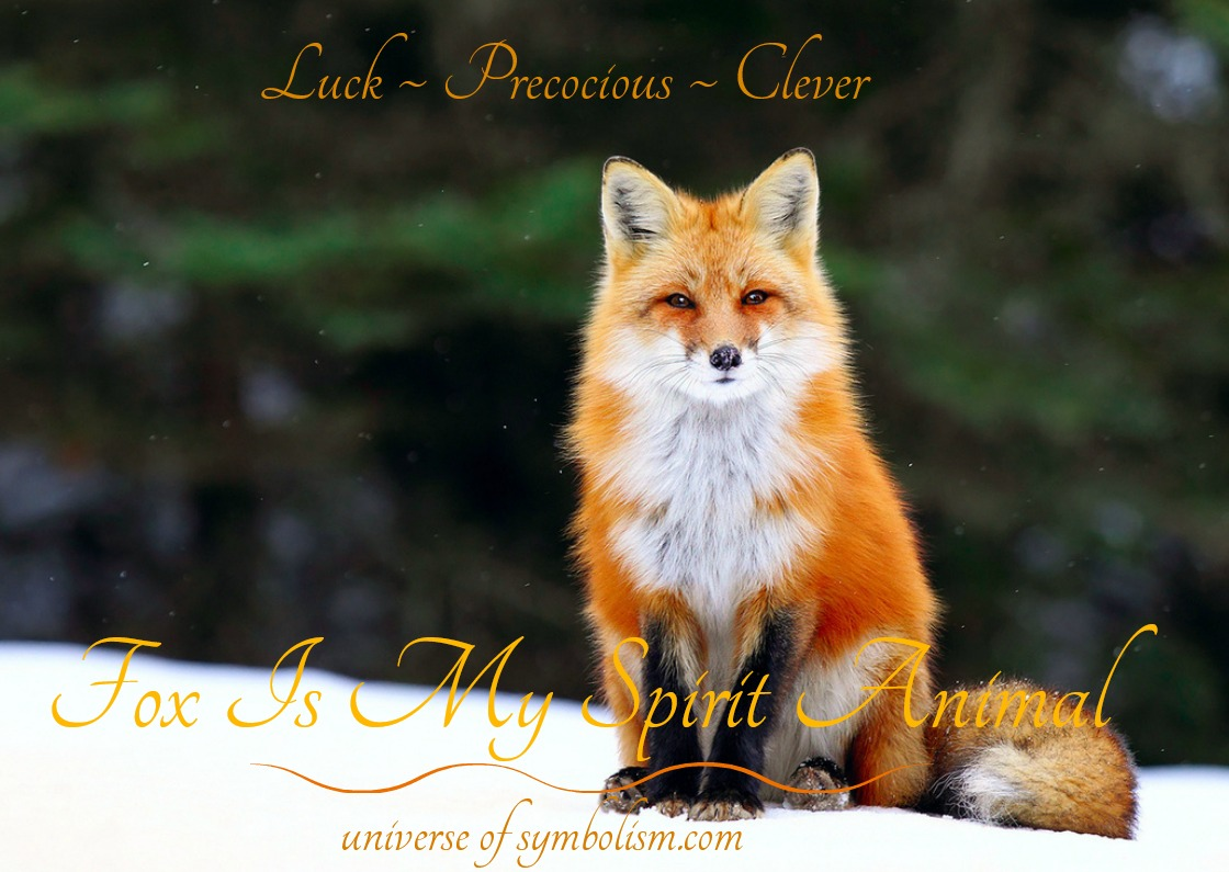 Symbolic meaning of fox spirit totem power animal messengers fox spirit totem power animal symbolism meaning biocorpaavc Gallery
