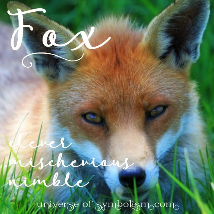 Symbolic Meaning Of Fox Spirit Totem Power Animal Messengers