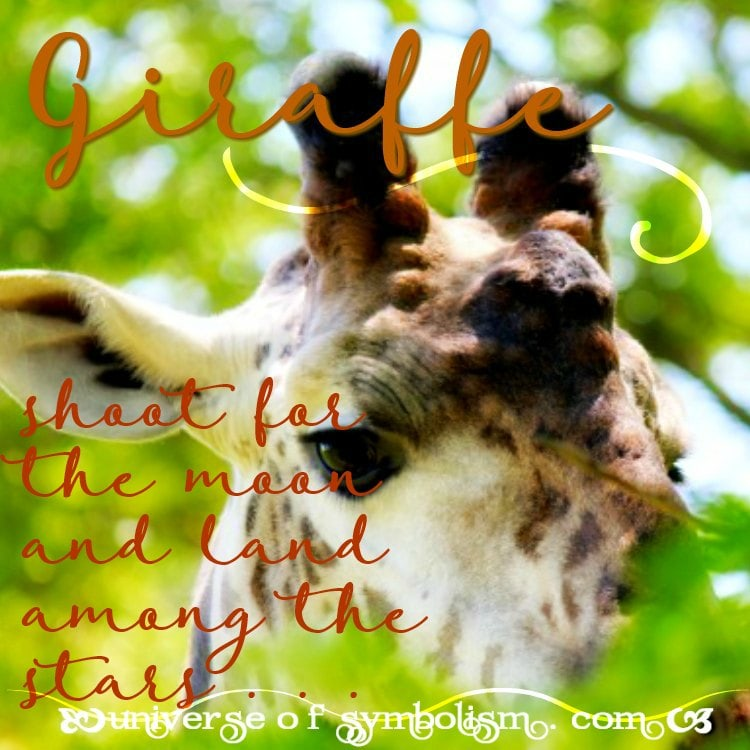 Everything Giraffe ! Giraffe Symbolism & Meaning. When Giraffe is Spirit, Totem & Power Animal, Giraffe Dreams & Video!