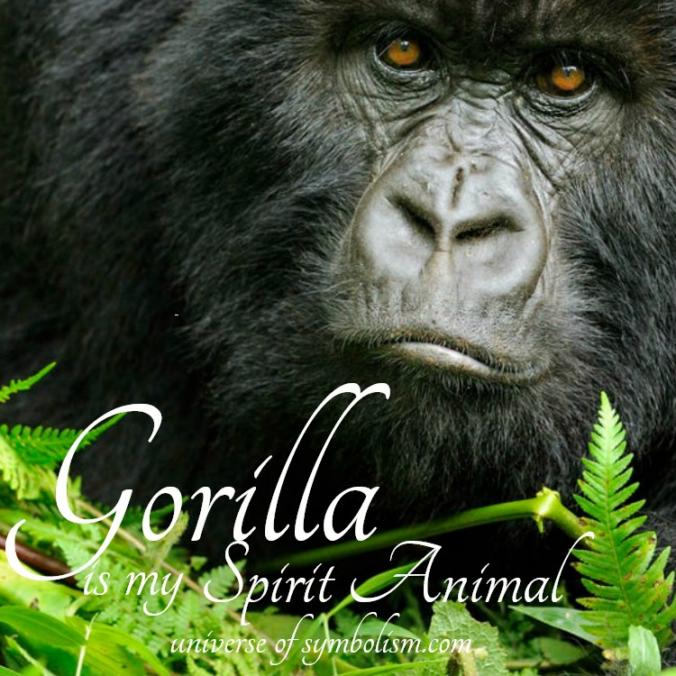 Gorilla symbolism and meaning - spirit, totem and power animals.  The gorilla is symbolic of respect, authority and a gentle nature at heart