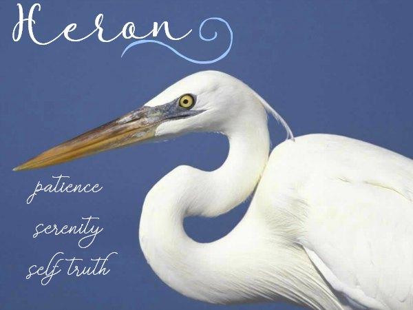Heron Symbolism & Meaning - Spiritual significance of Heron, Heron as Spirit, Totem & Power Animal - Dream Meanings of Heron