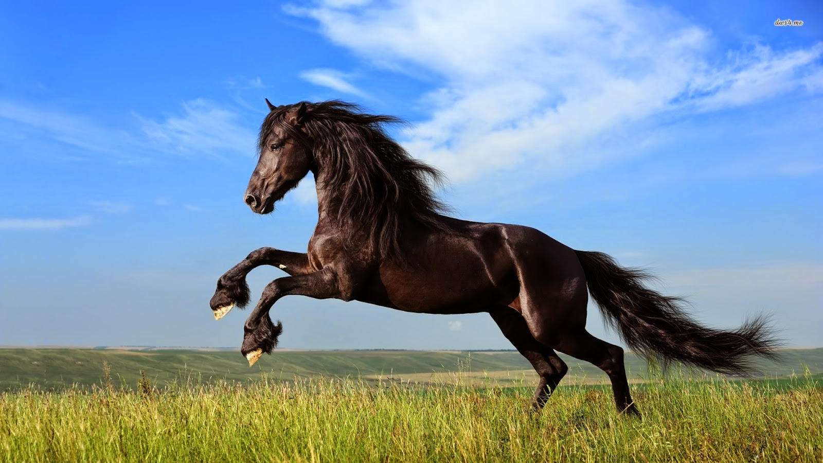 Feng Shui Good Fortune Symbol the Horse