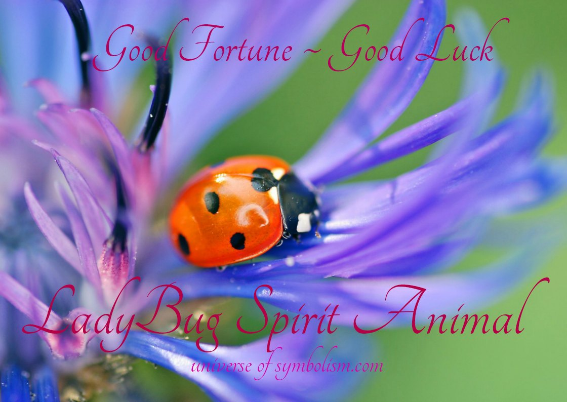 Ladybug Spirit, Totem, Power Animal Symbolism & Meaning also known as Ladybird