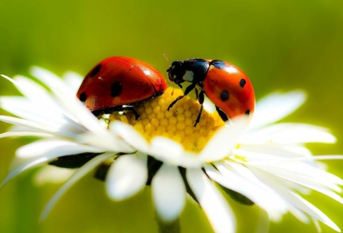 ladybugs so enchanting