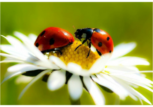 Meaning of ladybug landing on you