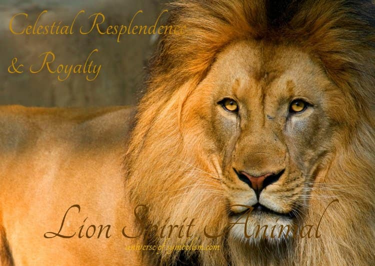 Lion Symbolism Lion Meaning Lion Spirit Totem Animal Guidance