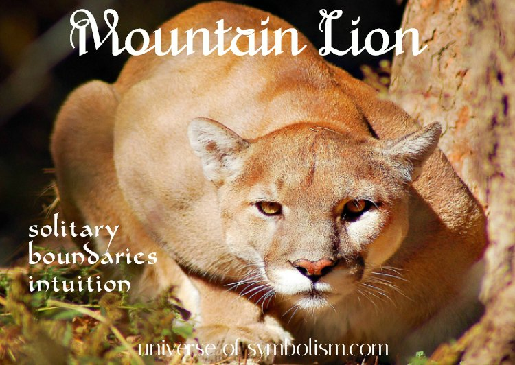 Mountain Lion Spirit, Totem & Power Animal Meaning and Symbolism - the Mountain Lion symbolizes boundaries, intuition and solitude...