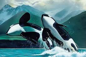 Orcas mate fir life