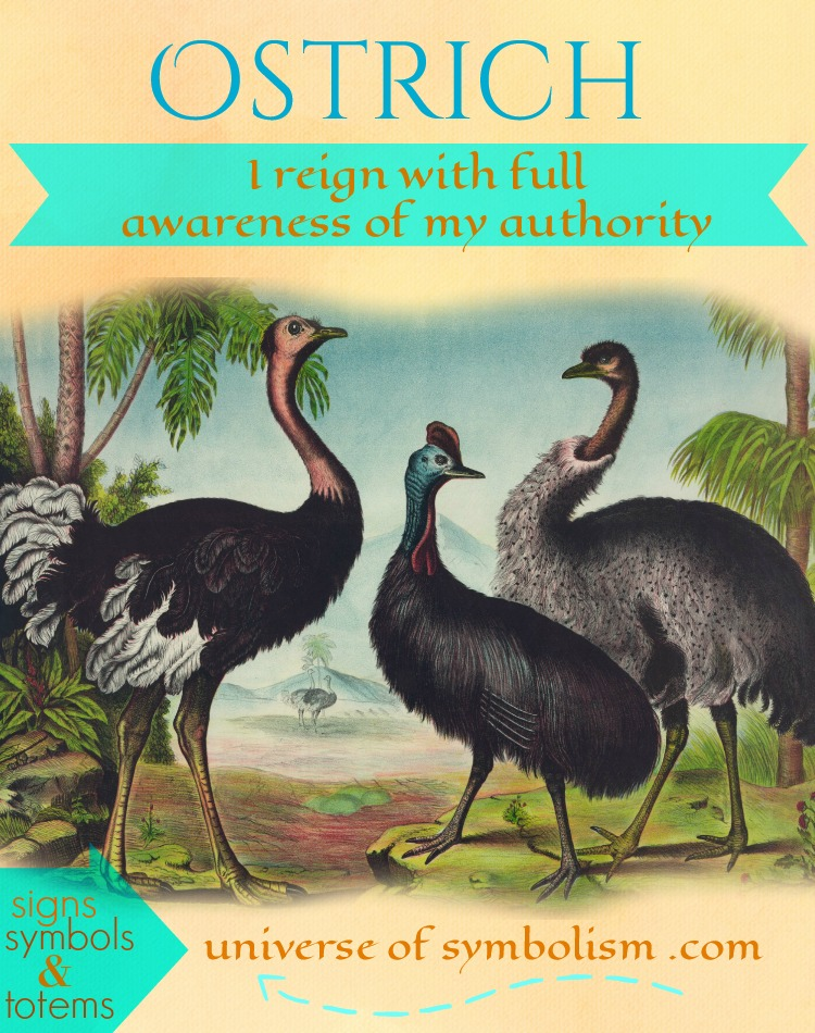 Ostrich Power Animal, a symbol of supreme authority