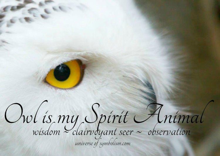 Owl is my Spirit Animal - Owl Meaning & Symbolism