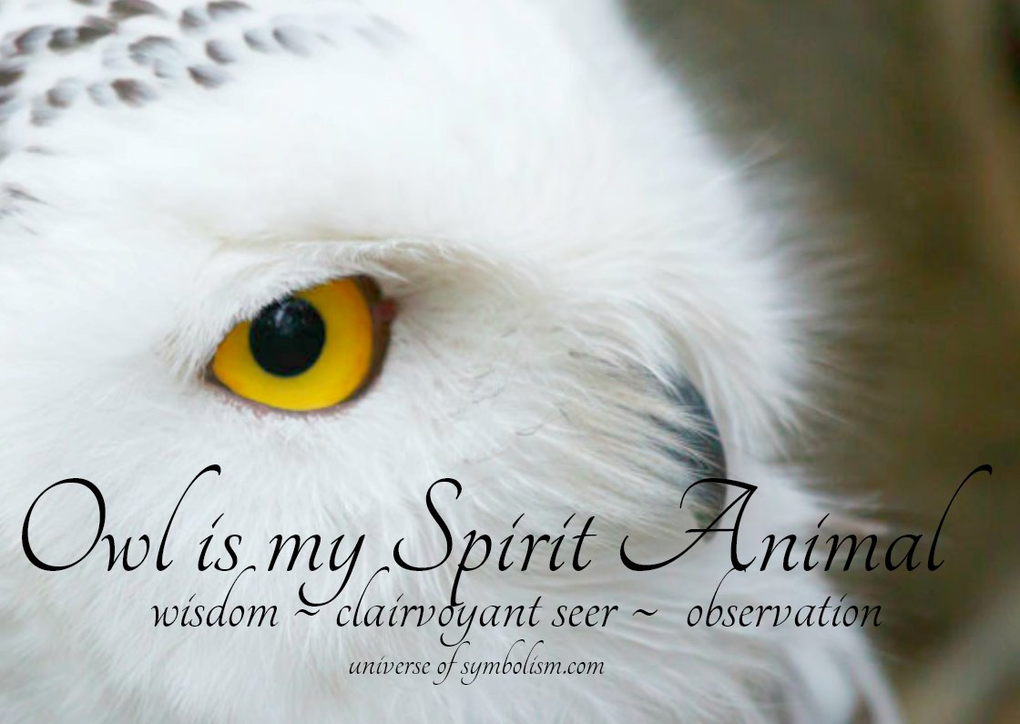 Owl spirit & totem animal, symbolism and meaning