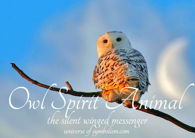 Owl Spirit, Totem & Power Animal, Symbolism & Meaning of Owl, Dream Symbolism and Meaning
